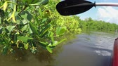 veslo : CLOSE UP: Oaring in canoe on calm mangrove river canal Dostupné videozáznamy