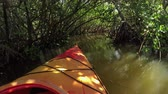 first person view : CLOSE UP: Kayaking through mangrove trees jungle in calm river canal in sunny summer