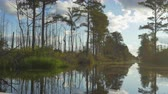 cipreste : AERIAL: Amazing wetlands swamp canal with tall mossy trees in beautiful summer evening. Gorgeous reflection of cypress swamp tree canopies with beautiful spanish moss in calm glassy water surface Stock Footage