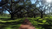louisiana : SLOW MOTION: Big beautiful live oak avenue with spanish moss at historic Oak Alley Plantation Louisiana in sunny summer