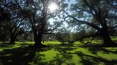louisiana : SLOW MOTION CLOSE UP: Beautiful summer sun shining through big majestic live oak canopies in gorgeous nature garden park