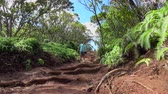 kenarlar : LOW ANGLE VIEW: Cheerful young man and woman walking along dirt path leading through lush jungle volcanic Hawaii. Sports couple on summer vacation hiking in Hawaiian rainforest on a muddy road Stok Video