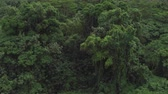 akác : AERIAL CLOSE UP: Flying right above beautiful impassable overgrown primeval forest. Beautiful detailed view of amazing tropical jungle treetops, lush canopies in dense deciduous and acacia rainforest Stock mozgókép