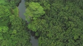 çarpıcı : AERIAL CLOSE UP: Flying right above beautiful jungle treetops and lush canopies along peaceful river in thick deciduous, acacia rainforest. Amazing overgrown primeval forest in tropical island Kawai