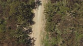 rozsáhlý : AERIAL, MOVING BACKWARDS, LOWERING VIEW: Flying above straight wide dusty dried up countryside highway road surrounded by beautiful tall eucalyptus tree forest on hot and dry sunny summer day