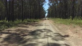 спидвей : AERIAL, CLOSE UP, MOVING FORWARD: White SUV car driving fast along dried up road lifting and leaving cloud of dirt behind. Joyride in automobile through vast lush eucalyptus forest on hot summer day Стоковые видеозаписи