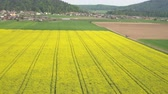 рапсовое : AERIAL, DISTANCING: Stunning picturesque yellow blooming rapeseed and vast young green wheatgrass field on bio cultivated agricultural farm land on sunny spring evening near small rural village Стоковые видеозаписи