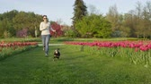 mowed : SLOW MOTION: Happy young woman running with her dog between colourful rows of flowering tulips. Stunning colourful tulip flowerbeds at beautiful local floricultural park on sunny spring day
