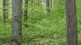 toco : SLOW MOTION CLOSE UP: Young green trees in lush dense forest in springtime Stock Footage