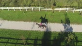 klusat : AERIAL: Flying above beautiful big dark brown gelding trotting on dirt path on beautiful horse ranch. Young female rider horseback riding a strong powerful brown stallion by fenced meadow fields Dostupné videozáznamy