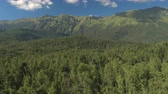 stunning view : AERIAL: Flying close above beautiful lush green tree canopies in vast never ending deciduous and coniferous woods. Small forest path leading to stunning overgrown foothills and tall rocky mountains Stock Footage