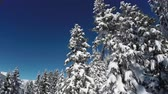 wintertime : AERIAL: Flying along beautiful spruce trees covered with white snowy blanket against blue skis. Picturesque view of amazing winter wonderland and sleeping pine forest covering steep mountain foothill