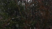 tempestade de neve : SLOW MOTION, CLOSE UP: Unrespectable off season heavy snow blizzard in local park in spring when trees are becoming green. Unpredictable extreme fall of temperatures and frost damage on plants Stock Footage