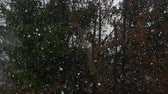 неустойчивый : SLOW MOTION, CLOSE UP: Heavy snow blizzard covering trees in forest in spring as a result of global warming and pollution. Extreme climate change, fall of temperatures and frost damaging the plants