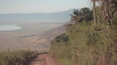 кактусы : AERIAL, CLOSE UP: Overgrown lush jungle vegetation, beautiful big cactuses and arid bushland grassland savannah surrounding dusty steep road descending into breathtaking Ngorongoro conservation area