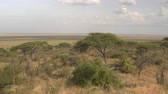 veld : Panoramic view of spectacular flatland landscape in Serengeti National park, Africa. Beautiful green acacia tree forest on the hill slope and never-ending savannah grassland plain field called veld