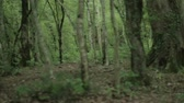Slow panorama of dark forest with trunks and roots. Vídeos