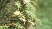 Fern growing on the tree trunk with moss on it. Blurry  bokeh background.