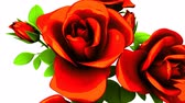 подарки : Red roses  bouquet on white background.3DCG rendering animation that can loop.