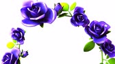sem costura : Blue roses frame on white text space.3DCG rendering animation that can loop.
