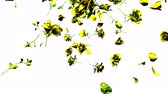 serin : Falling yellow roses on white background.3DCG render animation. Stok Video
