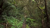tronco de árvore : Rainforest jungle path. Rainforest in anaga mountains, Tenerife, Canary islands, Spain.