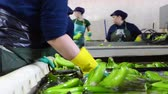 Operator washing bunches of banana at packaging plant. Archivo de Video