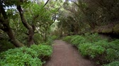 Rainforest jungle path. Rainforest in anaga mountains, Tenerife, Canary islands, Spain.