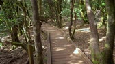 wodden path in rainforest landscape in anaga mountains, Tenerife, Canary islands, Spain.