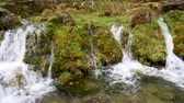 Stones and rocks covered by moss along water stream flowing through green forest