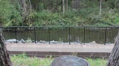 runners : Jogger in the Park on a Bridge Stock Footage