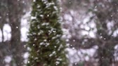 zasněžené : Falling snow in slow motion with blurred pine tree in the background