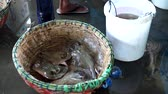 Fresh marine stingray for sale at Traditional Seafood market 動画素材