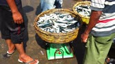 Fresh Sardines for sale at Traditional Fish Market