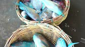 Fresh Blue Parrot fish at Traditional Fish Market