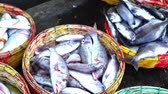 Fresh Tropical fish on basket for sale at Seafood Market