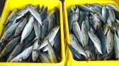 Seafood Vendor Packing Fresh Sardines with Ice at Fish Market