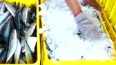 alice : Seafood Vendor Packing Fresh Sardines with Ice at Fish Market