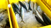 Fish Vendor Packaging Sardines with ice and Box - Container,