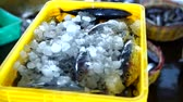 Seafood Vendor Packing Fresh Skipjack with Ice at Fish Market