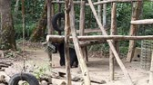 азиатский : Himalayan bears in the zoo
