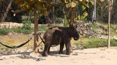 щит : A family of Asian elephants on an elephant farm in Thailand