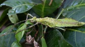 antena : Exotic tropical insects in the terrarium of Thailand. Insects of Asia Vídeos
