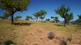 magnesio : Almond tree landscape against blue sky. Archivo de Video