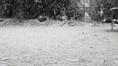 текстура : Heavy snowfall in a private garden with the grass almost covered by white snowflakes Стоковые видеозаписи