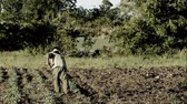 cubano : Farmer working on his field Stock Footage