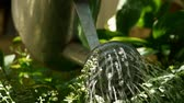 Close up of a watering can watering flower in slow motion