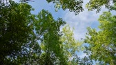 Video animation of trees shoot underneath with a large chunk of blue sky
