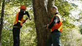 analyzing : Environment workers taking a wood sample out of a tree trunk Stock Footage