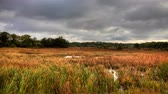 energy : 4K UltraHD Motion Controlled pan of a marshland in autumn, a timelapse